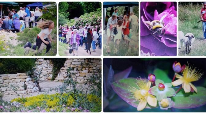 Blütenfest am 5. Juni – da blüht Ihnen was