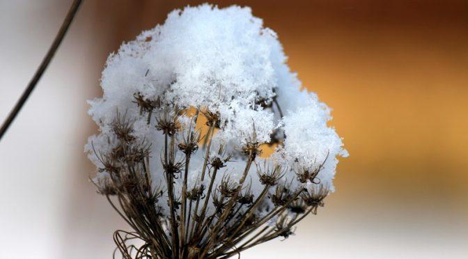 Naturschaugarten im Schnee