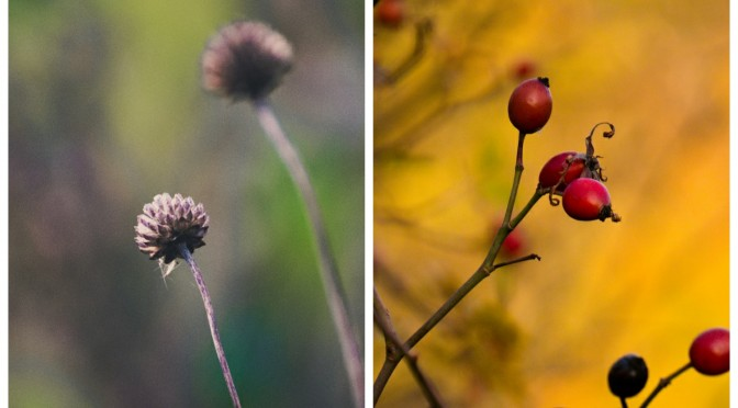 Herbst- und Wintermotive im NaSchau