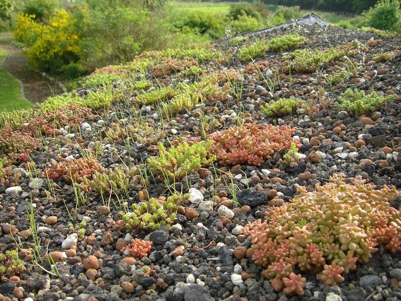 Dach des Wildbienenhotels - mit Sedumgewächsen bepflanzt