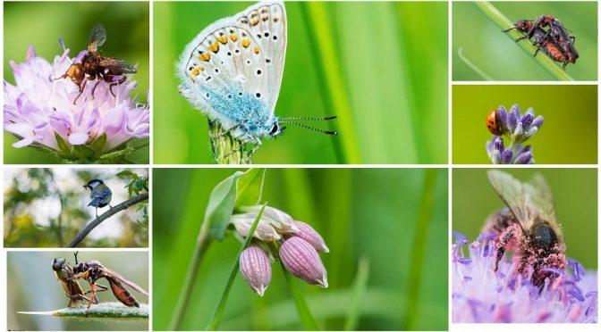 Fotos von Naturschaugarten Lindenmühle von Martin Kuhlen