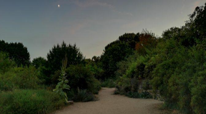 Warum nicht mal in einer warmen Sommernacht in den Naturschaugarten Lindenmühle?
