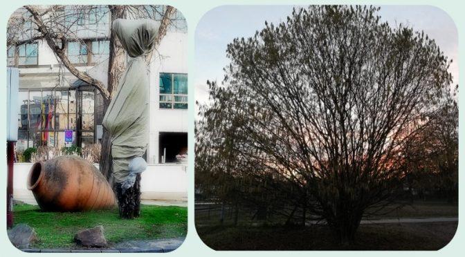 Das Bild ist eine Collage und zeigt auf der einen Seite einen Haselnussstrauch und, als übles Gegenbeispiel eine absonderlich eingepackte Palme