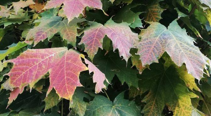 Herbstlaut